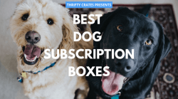 26 Best Dog Subscription Boxes (Toys & Treats Delivered Monthly)