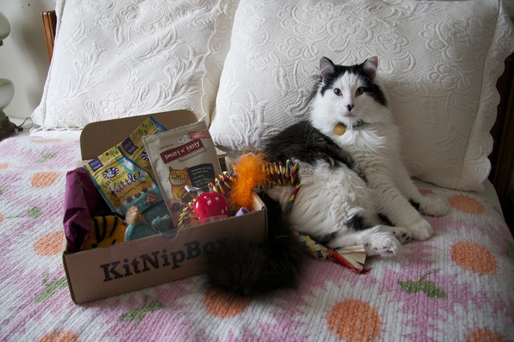 kitnipbox subscription