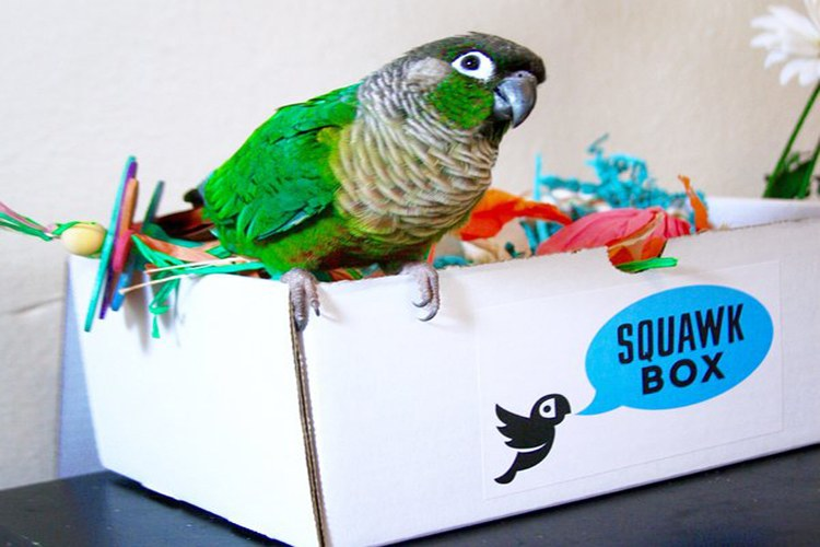 squawk box sample delivery