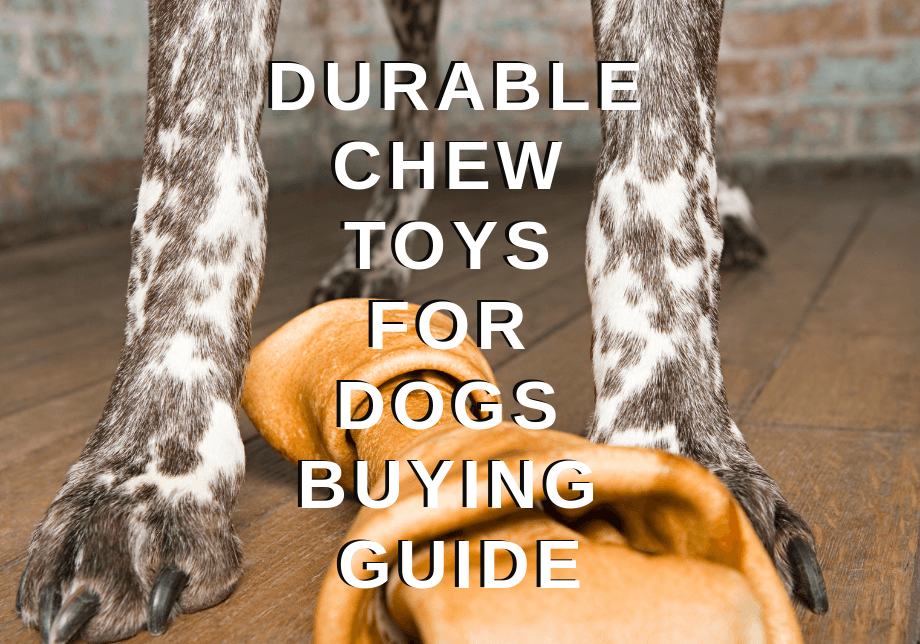 durable chew toys for dogs buying guide